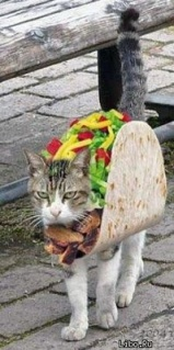 Taco-Cat-Halloween-Costume_jpg